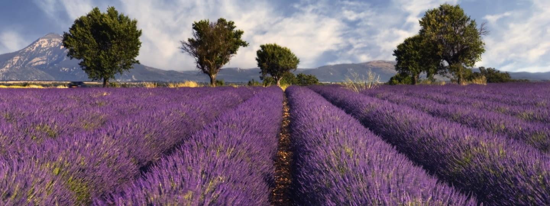 provence frankreich lavendel feld lila istock 000004428073
